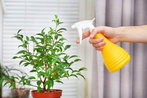 Обрызгивание растений из пульверизатора