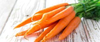 Пучок свежей моркови с ботвой