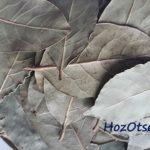 Сушеный лавровый лист